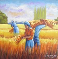 colheita de trigo6